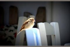 Kalymnos, Vlychadia