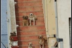 Leros-crazy-dog-lady